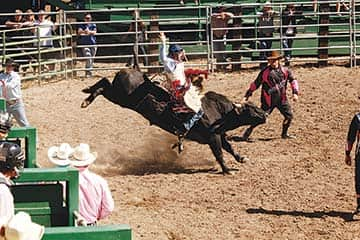 082114-Rodeo_9037