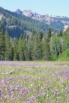 The changing seasons of Page Meadows