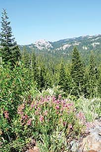 071014-TahoeTime_flowers_c.TH