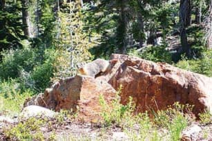 071014-TahoeTime_marmot_c.TH