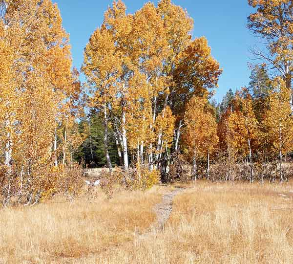 092216-fallhikes_fall-in-page-meadows_c-timh